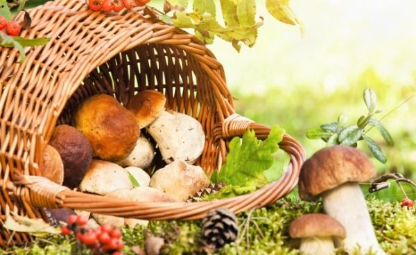 Сезон грибів відкрито. Як уникнути отруєння?